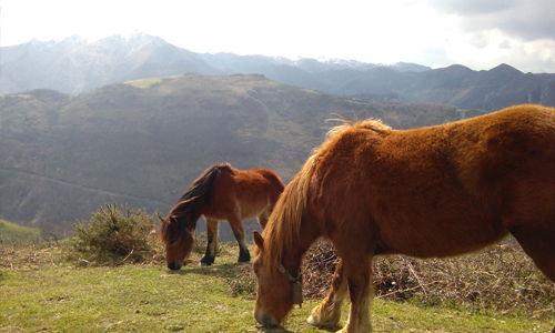 vistas pucis de europa turismo rural en asturias